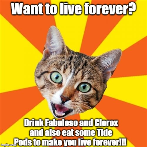 Bad Advice Cat |  Want to live forever? Drink Fabuloso and Clorox and also eat some Tide Pods to make you live forever!!! | image tagged in memes,bad advice cat,bleach,drink bleach,fabulous | made w/ Imgflip meme maker