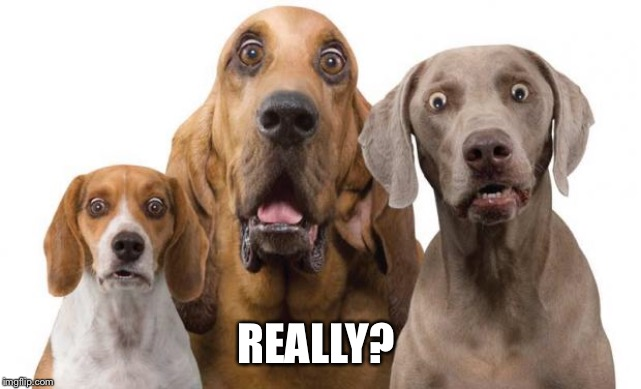 Dogs Surprised | REALLY? | image tagged in dogs surprised | made w/ Imgflip meme maker