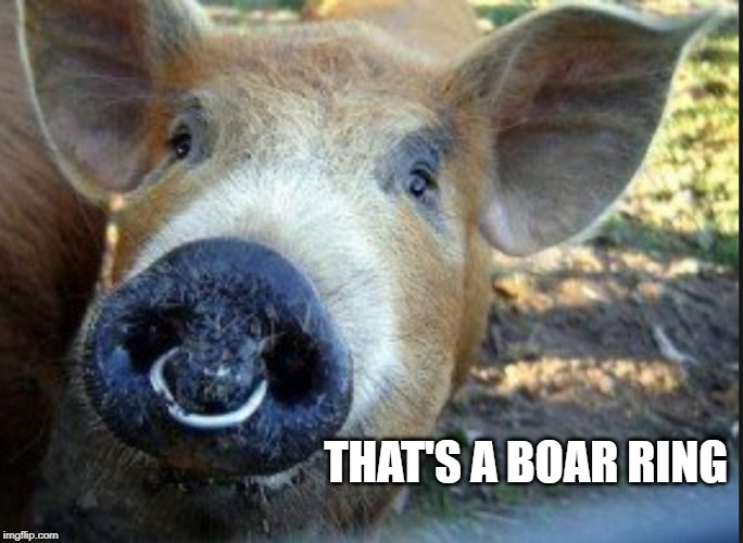 THAT'S A BOAR RING | made w/ Imgflip meme maker