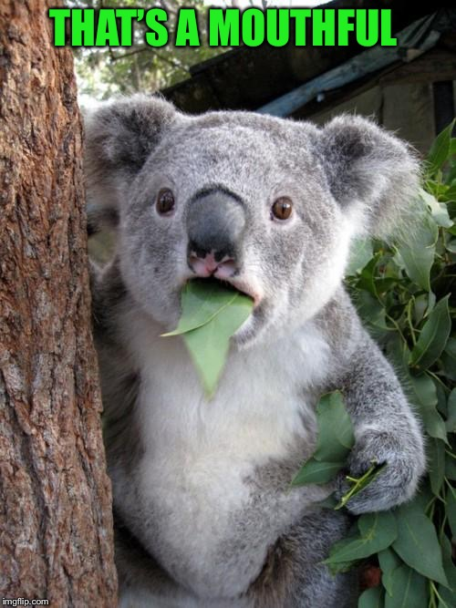 Surprised Koala Meme | THAT'S A MOUTHFUL | image tagged in memes,surprised koala | made w/ Imgflip meme maker