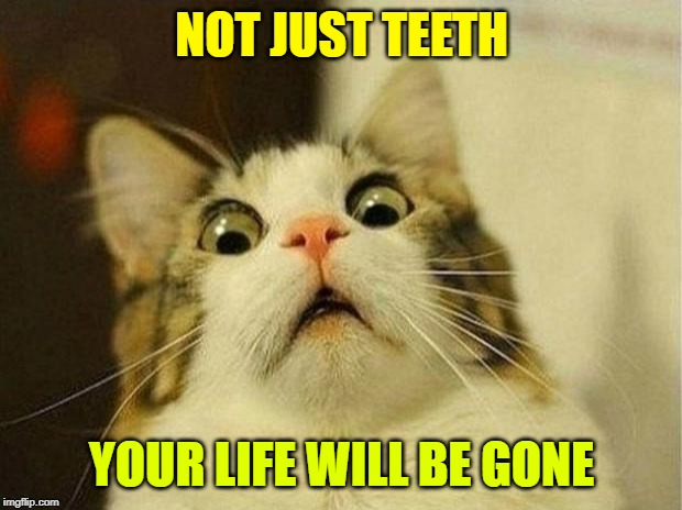 Scared Cat Meme | NOT JUST TEETH YOUR LIFE WILL BE GONE | image tagged in memes,scared cat | made w/ Imgflip meme maker