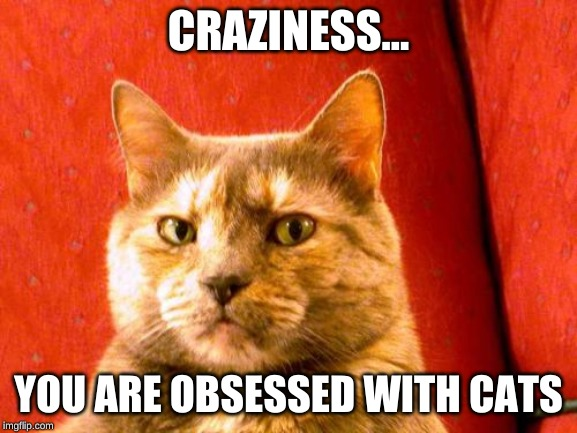 Suspicious Cat Meme | CRAZINESS... YOU ARE OBSESSED WITH CATS | image tagged in memes,suspicious cat | made w/ Imgflip meme maker