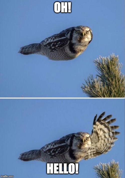Hello | OH! HELLO! | image tagged in funny,funny animals | made w/ Imgflip meme maker