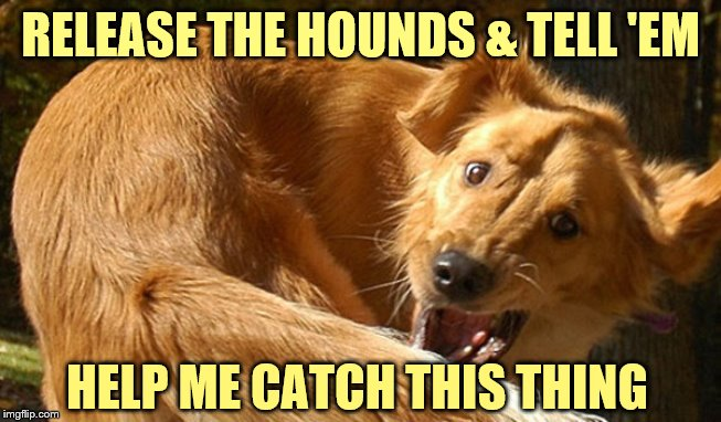 RELEASE THE HOUNDS & TELL 'EM HELP ME CATCH THIS THING | made w/ Imgflip meme maker