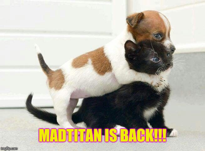 Dog Hugging Cat | MADTITAN IS BACK!!! | image tagged in dog hugging cat | made w/ Imgflip meme maker