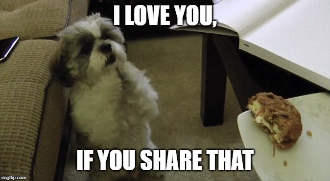 begging dog | I LOVE YOU, IF YOU SHARE THAT | image tagged in begging dog | made w/ Imgflip meme maker