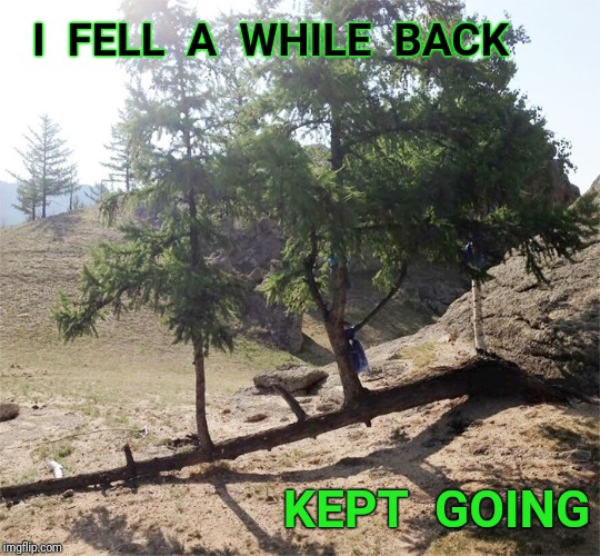 I  FELL  A  WHILE  BACK KEPT  GOING | image tagged in tree,fall | made w/ Imgflip meme maker