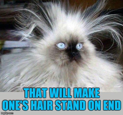 Crazy Hair Cat | THAT WILL MAKE ONE'S HAIR STAND ON END | image tagged in crazy hair cat | made w/ Imgflip meme maker