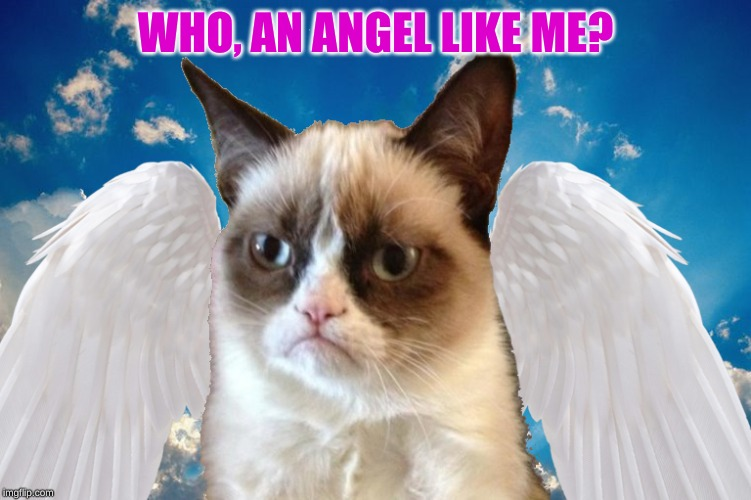 Angel Grumpy Cat | WHO, AN ANGEL LIKE ME? | image tagged in angel grumpy cat | made w/ Imgflip meme maker