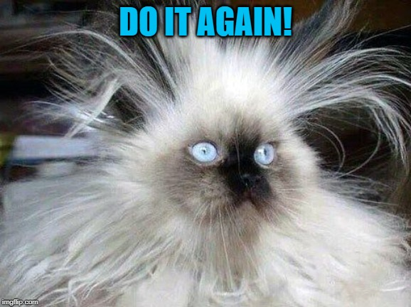 Crazy Hair Cat | DO IT AGAIN! | image tagged in crazy hair cat | made w/ Imgflip meme maker