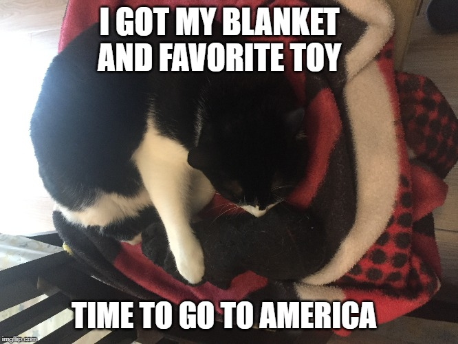 Cat trip | I GOT MY BLANKET AND FAVORITE TOY TIME TO GO TO AMERICA | image tagged in cat,trip,vacation | made w/ Imgflip meme maker