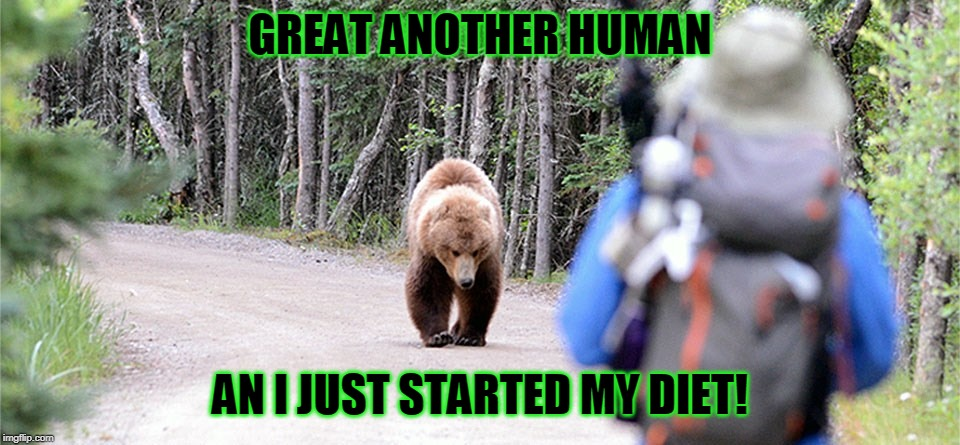Is it me or does that bear look annoyed? | GREAT ANOTHER HUMAN AN I JUST STARTED MY DIET! | image tagged in bad day,diets suck | made w/ Imgflip meme maker