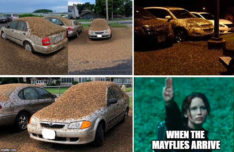 When the Mayflies Arrive | WHEN THE MAYFLIES ARRIVE | image tagged in good luck,gross,boating,boats,lake erie | made w/ Imgflip meme maker