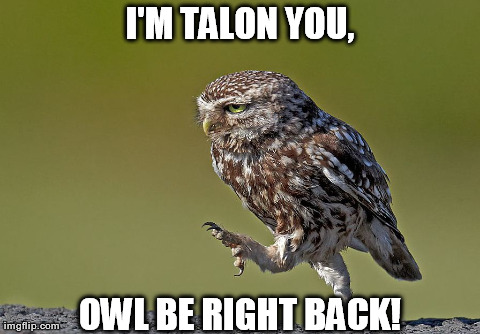 Owl Be Right Back Imgflip