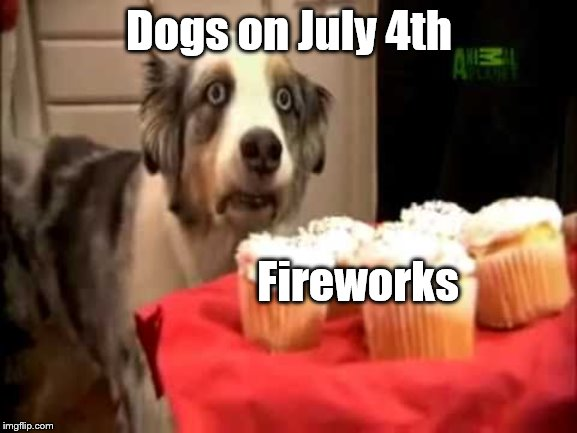 Independence Day Dog Drama | Dogs on July 4th Fireworks | image tagged in muffin dog ptsd,4th of july,independence day,dogs | made w/ Imgflip meme maker