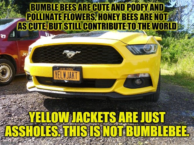 Not Bumble Bee | BUMBLE BEES ARE CUTE AND POOFY AND POLLINATE FLOWERS, HONEY BEES ARE NOT AS CUTE, BUT STILL CONTRIBUTE TO THE WORLD YELLOW JACKETS ARE JUST  | image tagged in cars,memes | made w/ Imgflip meme maker