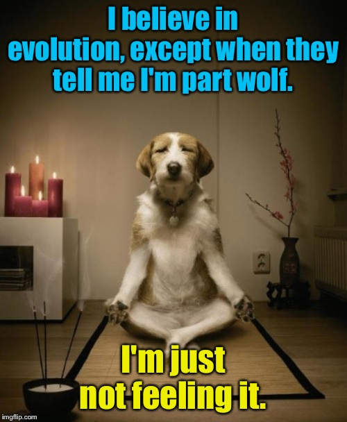 Part wolf?  Seriously? | I believe in evolution, except when they tell me I'm part wolf. I'm just not feeling it. | image tagged in zen dog | made w/ Imgflip meme maker