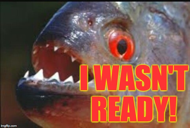 piranha | I WASN'T READY! | image tagged in piranha | made w/ Imgflip meme maker