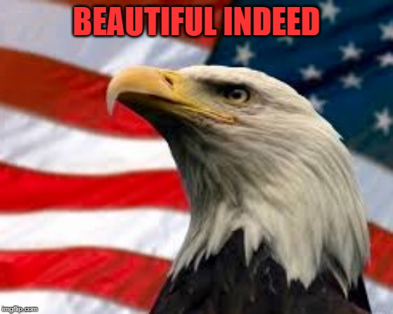 Murica Patriotic Eagle | BEAUTIFUL INDEED | image tagged in murica patriotic eagle | made w/ Imgflip meme maker