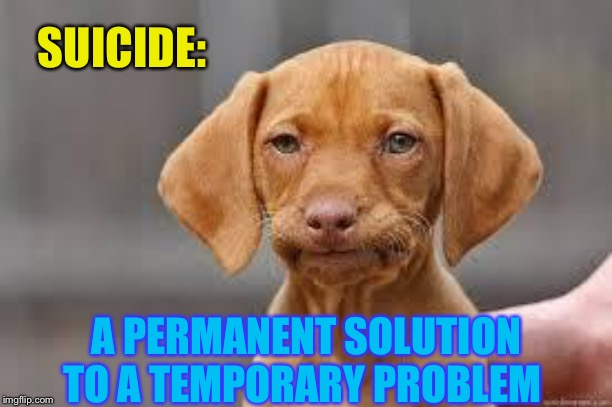 Disappointed Dog | SUICIDE: A PERMANENT SOLUTION TO A TEMPORARY PROBLEM | image tagged in disappointed dog | made w/ Imgflip meme maker