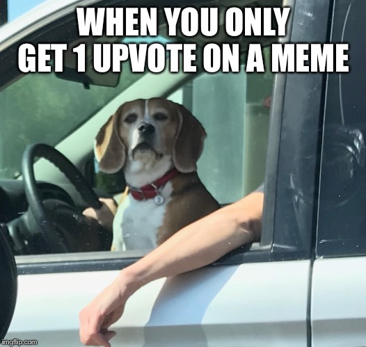 This happens | WHEN YOU ONLY GET 1 UPVOTE ON A MEME | image tagged in dogs,cars,upvote,why,memes | made w/ Imgflip meme maker