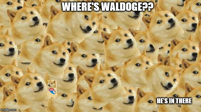 wall to Waldoge | WHERE'S WALDOGE?? HE'S IN THERE | image tagged in memes,multi doge,where's waldo | made w/ Imgflip meme maker