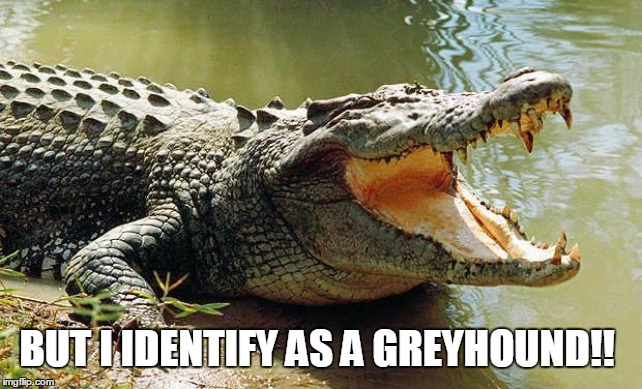 Crocodile barrel roll | BUT I IDENTIFY AS A GREYHOUND!! | image tagged in crocodile barrel roll | made w/ Imgflip meme maker