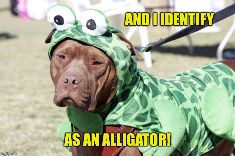 AND I IDENTIFY AS AN ALLIGATOR! | made w/ Imgflip meme maker