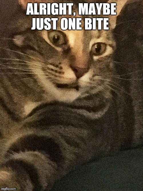 Hungry Cat | ALRIGHT, MAYBE JUST ONE BITE | image tagged in hungry cat | made w/ Imgflip meme maker