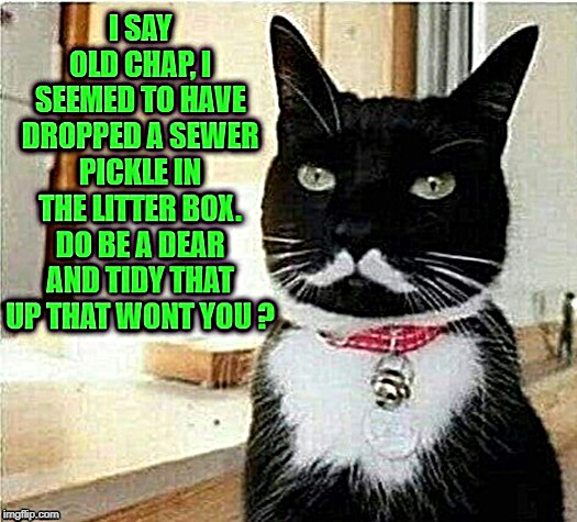 Mr. Charles Lickens | image tagged in meme,funny,cat,poop,litter box,british | made w/ Imgflip meme maker