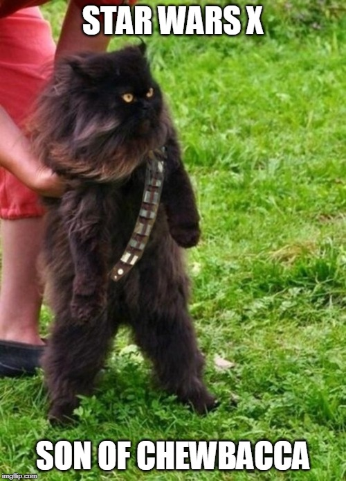Young Catewan | STAR WARS X SON OF CHEWBACCA | image tagged in star wars,chewie | made w/ Imgflip meme maker