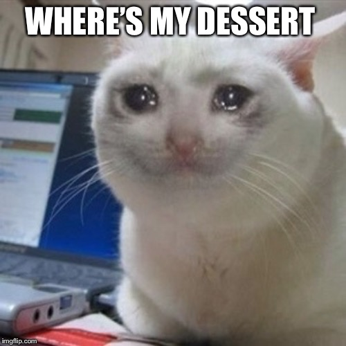 Crying cat | WHERE'S MY DESSERT | image tagged in crying cat | made w/ Imgflip meme maker