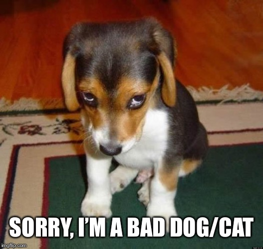 Ashamed | SORRY, I'M A BAD DOG/CAT | image tagged in ashamed | made w/ Imgflip meme maker