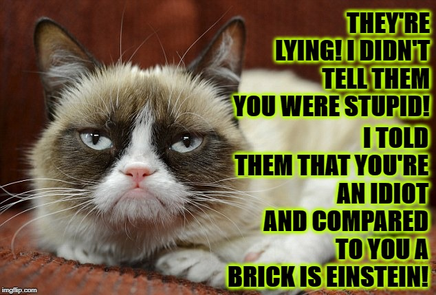 THEY'RE LYING! I DIDN'T TELL THEM YOU WERE STUPID! I TOLD THEM THAT YOU'RE AN IDIOT AND COMPARED TO YOU A BRICK IS EINSTEIN! | image tagged in stupid idiot | made w/ Imgflip meme maker