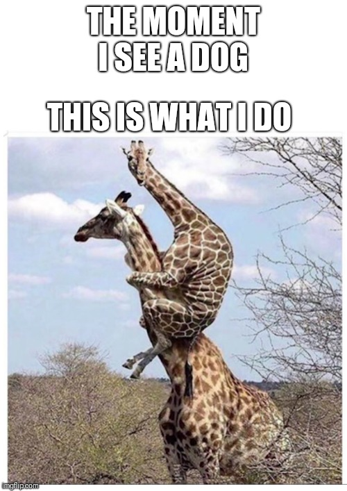 Anyone other than me scared of dogs? | THE MOMENT I SEE A DOG THIS IS WHAT I DO | image tagged in dogs,fear,scared,afraid,animals,giraffe | made w/ Imgflip meme maker