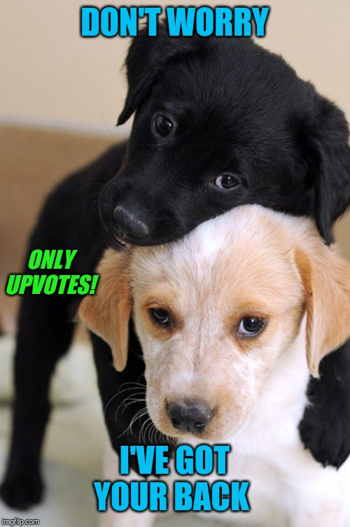 Puppy love  | DON'T WORRY I'VE GOT YOUR BACK ONLY UPVOTES! | image tagged in puppy love | made w/ Imgflip meme maker