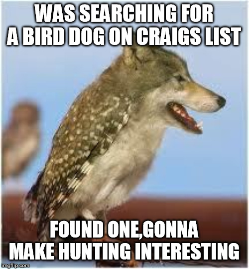WAS SEARCHING FOR A BIRD DOG ON CRAIGS LIST FOUND ONE,GONNA MAKE HUNTING INTERESTING | image tagged in bird dog | made w/ Imgflip meme maker
