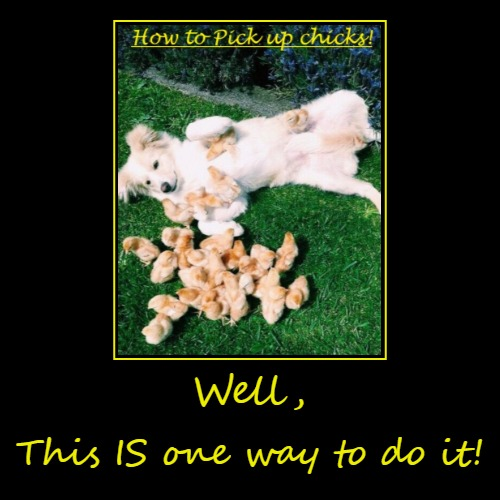 Pick up chicks | Well, | This IS one way to do it! | image tagged in funny,funny dogs,alright gentlemen we need a new idea | made w/ Imgflip demotivational maker