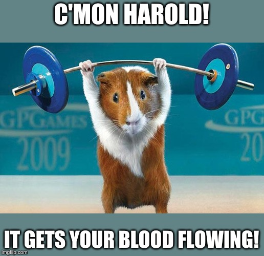 Funny exercise  | C'MON HAROLD! IT GETS YOUR BLOOD FLOWING! | image tagged in funny exercise | made w/ Imgflip meme maker