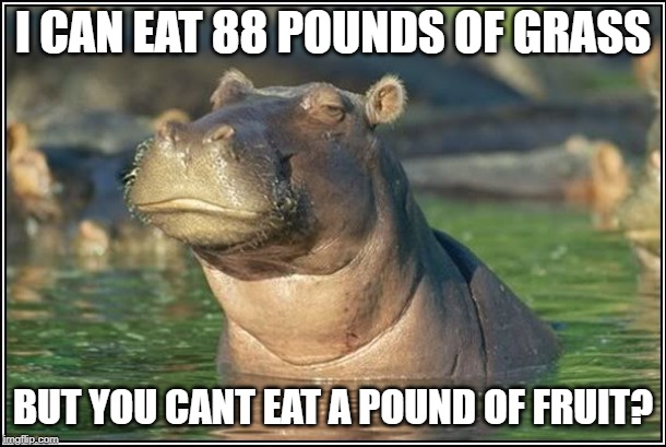 Pound of Fruit | I CAN EAT 88 POUNDS OF GRASS BUT YOU CANT EAT A POUND OF FRUIT? | image tagged in skeptical hippo,fruit,health,eating healthy | made w/ Imgflip meme maker