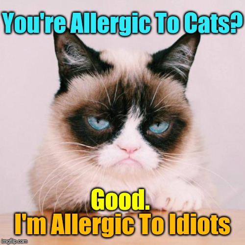 That Makes Us Even | You're Allergic To Cats? I'm Allergic To Idiots Good. | image tagged in grumpy cat again,memes,grumpy cat,cats | made w/ Imgflip meme maker