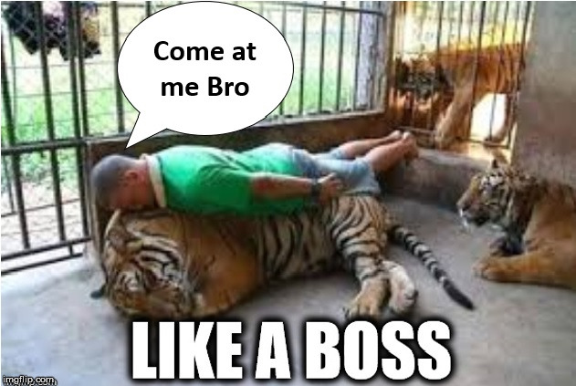 Eye of The Tiger | image tagged in come at me bro,eye of the tiger,you've been punkd,not afraid of the cat,first world problems cat | made w/ Imgflip meme maker
