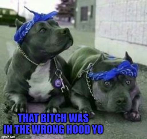 THAT B**CH WAS IN THE WRONG HOOD YO | made w/ Imgflip meme maker