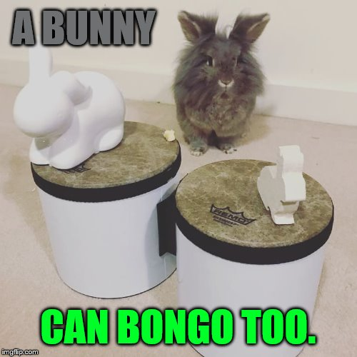 A BUNNY CAN BONGO TOO. | made w/ Imgflip meme maker