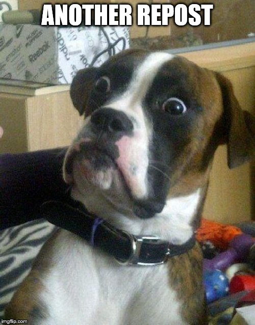 Surprised Dog | ANOTHER REPOST | image tagged in surprised dog | made w/ Imgflip meme maker