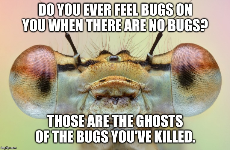 DO YOU EVER FEEL BUGS ON YOU WHEN THERE ARE NO BUGS? THOSE ARE THE GHOSTS OF THE BUGS YOU'VE KILLED. | image tagged in funny memes | made w/ Imgflip meme maker