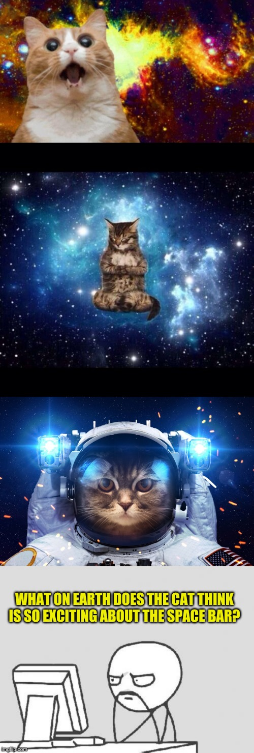 Explanation for why cats love sleeping on the keyboard? Imagination will take you anywhere! | WHAT ON EARTH DOES THE CAT THINK IS SO EXCITING ABOUT THE SPACE BAR? | image tagged in memes,computer guy,space cat,space cat 2,confused gandalf,imagine if you will | made w/ Imgflip meme maker