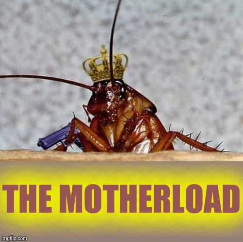 Cockroach King | THE MOTHERLOAD | image tagged in cockroach king | made w/ Imgflip meme maker