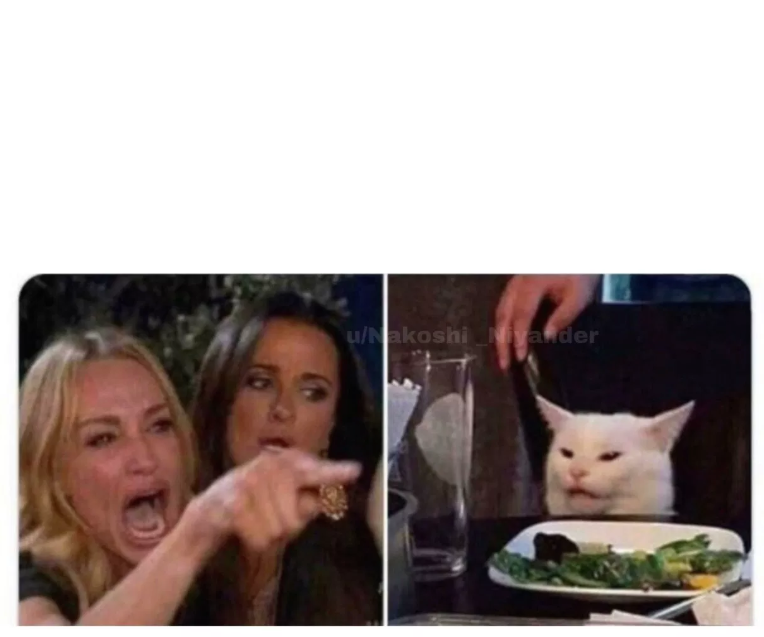 Cat Meme Templates Imgflip
