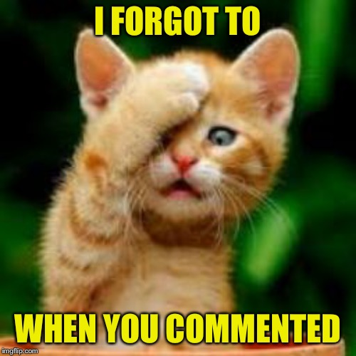 forgot cat | I FORGOT TO WHEN YOU COMMENTED | image tagged in forgot cat | made w/ Imgflip meme maker